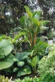 45 best philodendron images on pinterest houseplants plants and