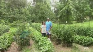 How To Grow Green Beans On A Trellis Growing Green Beans How To Get Good Production Youtube
