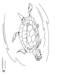 swimming red eared slider coloring pages hellokids com