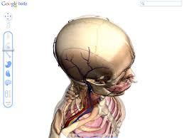 Google Body Anatomy Enhanced Google Body Browser For Human Anatomy