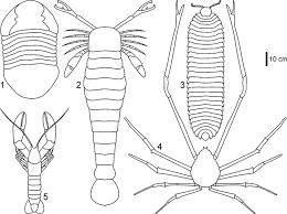 the world u0027s biggest trilobite u2014isotelus rex new species from the