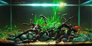 tropical aquarium fish away