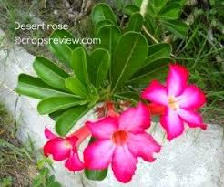 common plant names can mislead