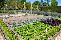kitchen garden stock image image of landscape seed 24903961