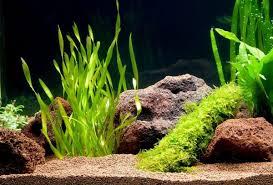 Diy Aquascape How To Choose Plants For Aquascapes U2013 Beginners U0027 Guide