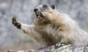 eat groundhog extra crispy