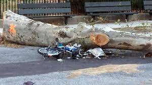 bike delivery hit by falling tree in dripline net
