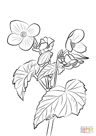 tuberous begonia coloring page free printable coloring pages