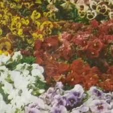 Flower Seeds Online - buy flower seeds online at best prices in india at bighaat