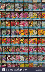 flower seed packets flower seed packets in a garden centre uk stock photo 118900271