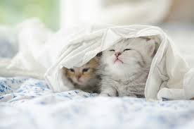 imagenes de gatitos sin frases imágenes de gatos fotos de gatitos lindos 101 fotos