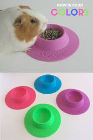 Cages For Guinea Pigs Best 25 Cages For Guinea Pigs Ideas On Pinterest Pet Guinea