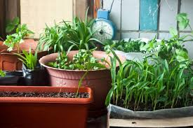 benefits of growing and eating home grown vegetables