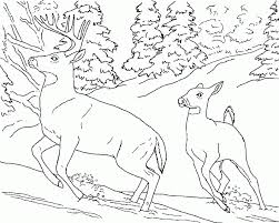 georgia o keeffe coloring pages 452209
