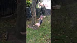 dog finds a swing youtube