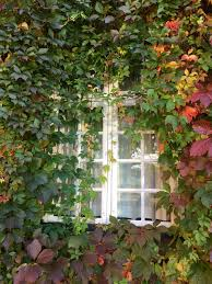 free images tree leaf flower window green cottage ivy