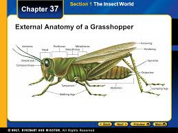 chapter 37 table of contents section 1 the insect world ppt