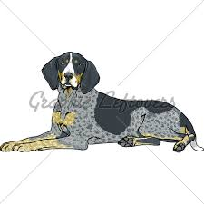 bluetick coonhound westminster coonhound clipart