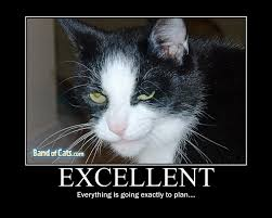 Evil Cat Meme - excellent everything is going exactly as planned cat meme cat