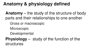 Outline The Anatomy And Physiology Of The Human Body Anatomy And Physiology Introduction To The Human Body