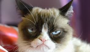 Grumpy Cat Meme - grumpy cat meme know how it became a popular meme stemjar
