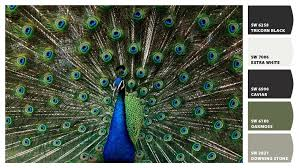 peacock paint colors by sherwin williams paint colors