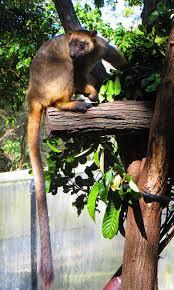 tree kangaroo howlingpixel