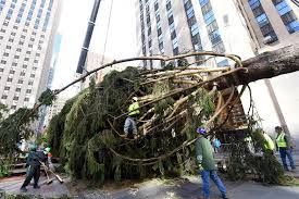 on the way rockefeller center tree goes up nbc news