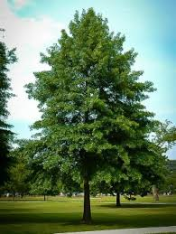 the meaning and symbolism of the word oak