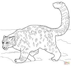 coloring pages animals cheetah coloring pages leopard coloring
