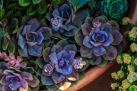 how to grow healthy succulent plants