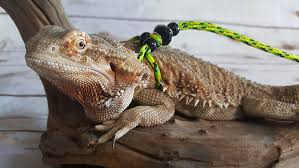 amazon com adjustable reptile leash harness great for reptiles