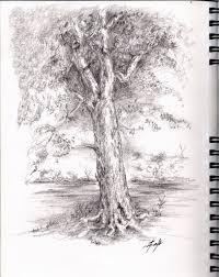 pencil drawing of a tree pencil tree drawings pencil sketch