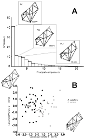 functional modularity in lake dwelling characin fishes of mexico