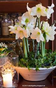 Wedding Flowers January 104 Best Flowers Images On Pinterest Flower Arrangements