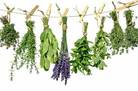 diy herb garden the herb world diy herb garden holder twincitiesview