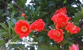 imagenes de jardines pequeños con flores árboles para jardines pequeños el granado fundació ilersis