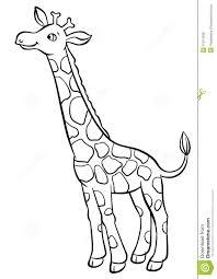 giraffe eating leaves from the tree stock illustration image