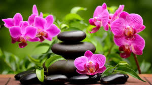 spa images hd spa orchids hd wallpaper wallpapers13 com