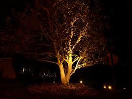 Tree Lights Landscape Landscape Lighting Tree Jpg