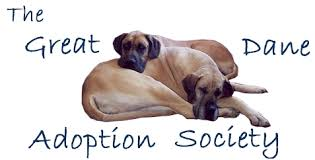 Blind Great Dane Great Dane Adoption Society Uk Rescue And Rehoming