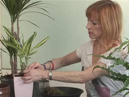 How To Arrange Indoor Plants by How To Look After House Plants Youtube