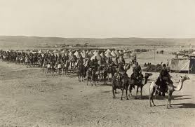 Animal Ottomans by Ottoman Camel Corps At Beersheba At Sinai And Palestine Campaign