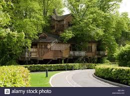 famous tree houses alnwick gardens famous tree house northumberland stock photo