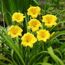 flower bulbs u0026 perennials for sale buy in bulk u0026 save