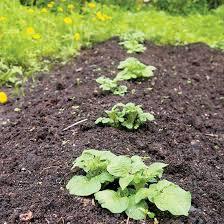 What Type Of Soil For Vegetable Garden - organic gardening heirloom gardener