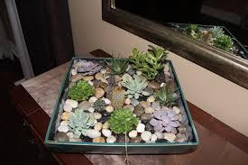 weekend diy indoor succulent planter sweet suburban bliss