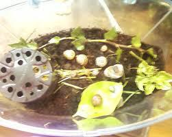 How To Care For Your by How To Care For Your Pet Garden Snails Garden Snails Only 3 Steps