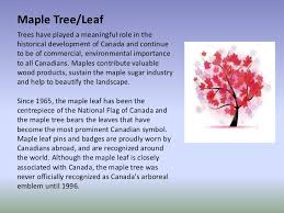 maple tree symbolism 87 maple tree symbolism japanese maple tree inspiration meaning