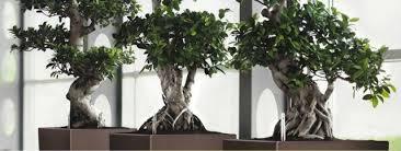 le bureau originale déco decoration originale bureau bonsai aménagement de plantes d